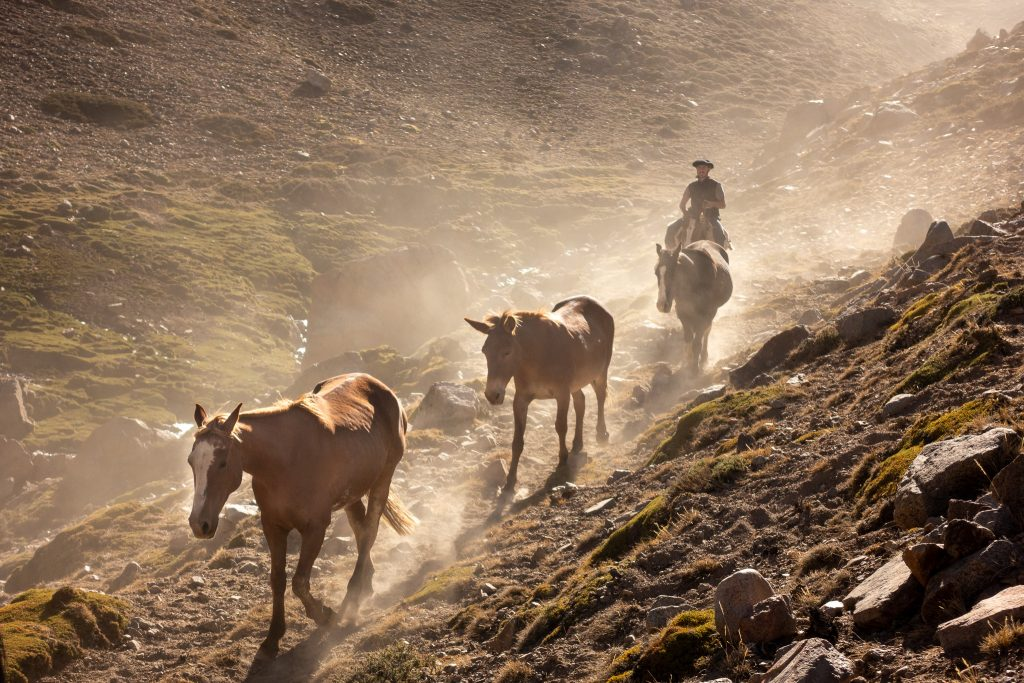 Gauchos and Arrieros walking the Andes Darwin Trail.