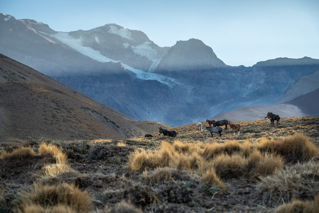 A stunning view of the Andes peaks against a clear blue sky with horses and mules in the field.