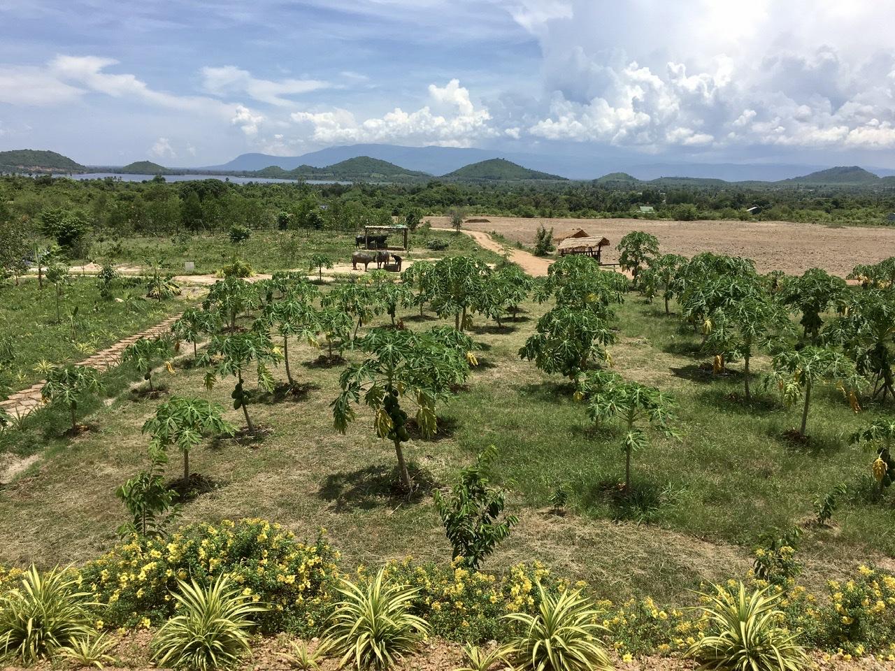 Cambodia Pepper Farm