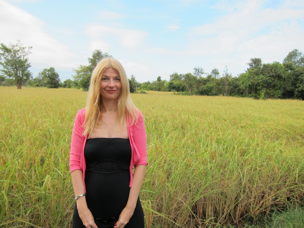 Rice Fields in Cambodia