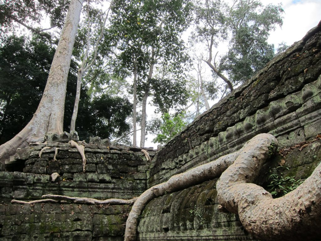 Ta Prohm Temple Cambodia Tree Roots