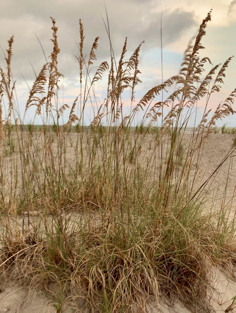 Tybee Island Dunes