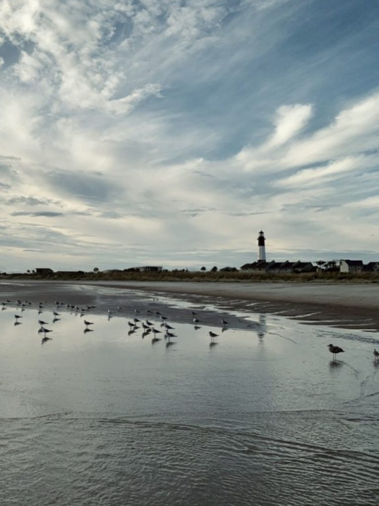 Birds in front of the lighthouse - Tybee.