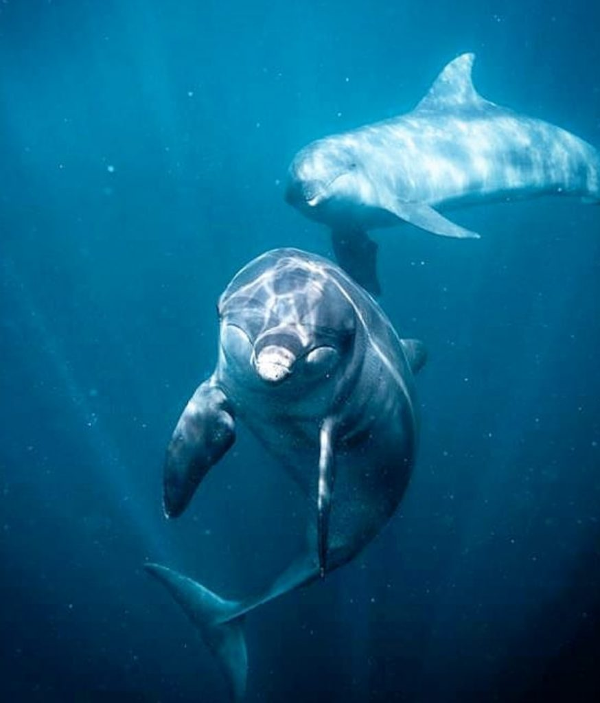 Dolphins by Pepe Arcos