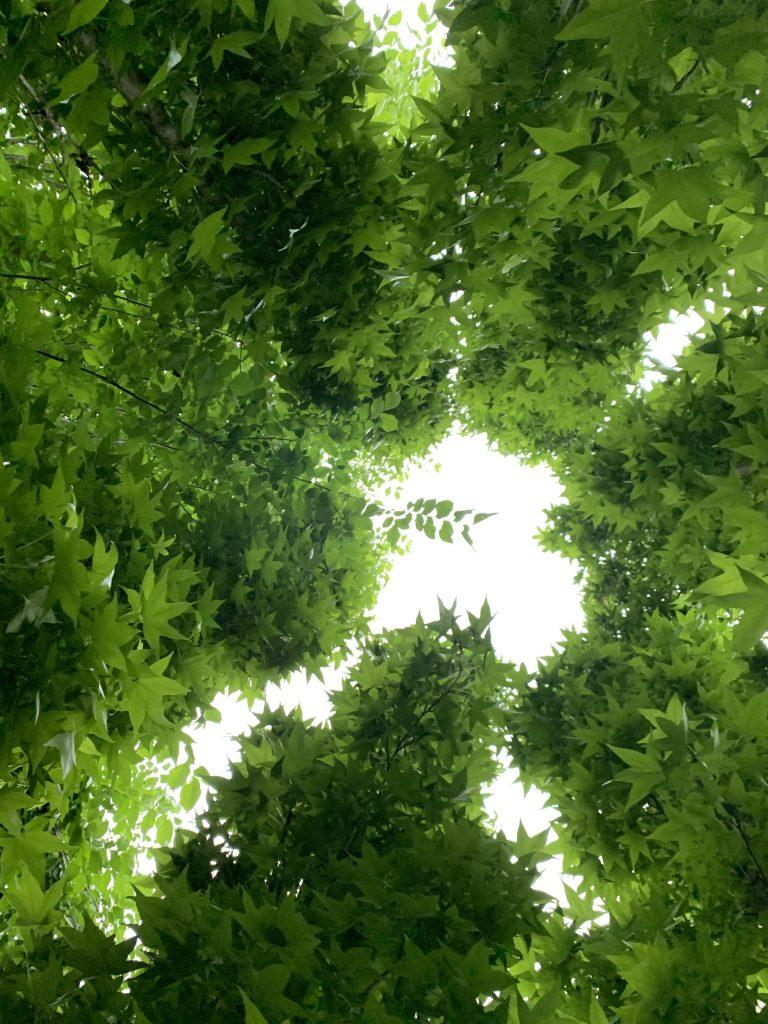 Gazing through the canopy at Atlanta Botanical Garden